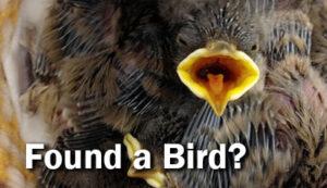 Found a Bird